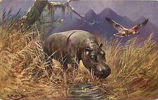 Vintage Art Postcard Artist M Muller Hippopotamus Animal Series 410 unposted