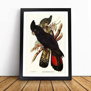 Banksian Cockatoo Flowers Bird Elizabeth Gould Framed Picture Print Wall Art
