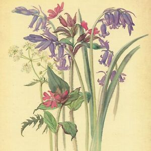 Edith Holden WILD HYACINTH FLOWERS vintage repro 1906 watercolor botanical print