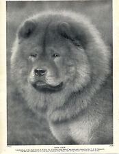 CHOW CHOW HEAD STUDY CHAMPION NAMED DOG LOVELY ORIGINAL PRINT PAGE FROM 1934