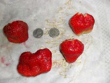 5 Whopper June bearing Live Strawberry Plants Large berry. zone 5-10 Not Dormant