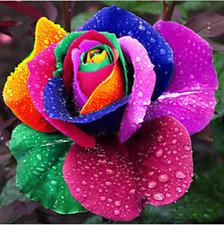Rainbow Rose Flower Seeds 30 Pcs Home Garden Plants Decoration Free Shipping