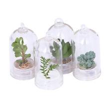 Real Live Succulent Plant Cactus Wearable Necklace Cute Chain Pendant Keyring