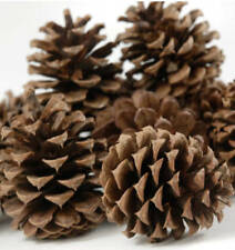 "12 BIG PINE CONES FOR CRAFTS 3"" 5"" NATURAL REAL CHRISTMAS HOLIDAY DECORATIONS"