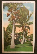 Coconuts Along Residence Street, Miami, FL