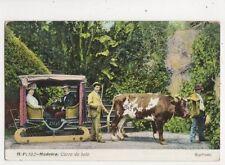 Madeira Carro de Bois Vintage Postcard 356b