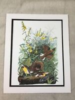1964 Vintage Bird Print Meadow Lark Audubon's Book of Birds of America LARGE