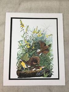 1964 Vintage Bird Print Meadow Lark Audubon's Book of Birds of America LARGE
