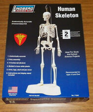"LINDBERG 14"" HUMAN SKELETON SCIENCE ANOTOMICALLY MODEL KIT NEW 71304"