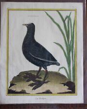 BUFFON oiseaux couleur par MARTINET La Foulque n°197
