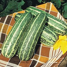 VEGETABLE  MARROW TIGER CROSS F1  12 FINEST SEEDS