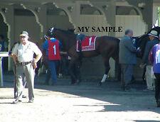 PALACE MALICE 8 by 10 PHOTO 2014 THE METROPOLITAN Horse Race BELMONT PARK #1