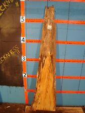 "# 7816 spalted red oak Live Edge Slab lumber craft wood L 63"" W 15 1/2"" T 13/16"""