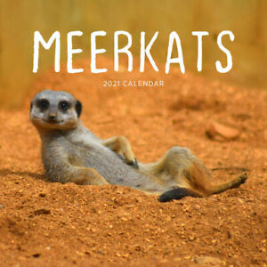2021 Meerkats Square Wall Calendar 30 x 30cm by Paper Pocket