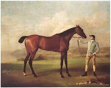 "1762 GEORGE STUBBS ART, Molly Long Legs, Jockey, RACE HORSE, 16""x13"" CANVAS"