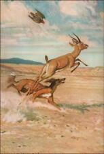 Saluki Dog Hunting Game with Hawk, vintage print, authentic 1958