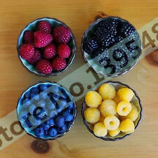 4 kinds of color 200 PCS raspberry seeds ( blue,  black,  red,  yellow)