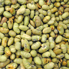 SweetGourmet Dry Roasted Salted Edamame, Green Soybeans - 1LB FREE SHIPPING!
