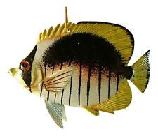 Sonstige Fisch- & Wassertier-Sammlerobjekte
