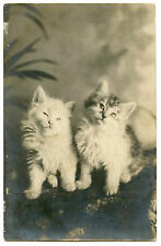 CHATS CHATONS CATS KITTENS