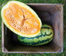 """ORANGEGLO"" Orange  25lb furit Super sweet WATERMELON  25 seeds Organic NON-GMO"