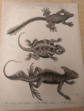 Lacerta: The Scallop-Tailed Lizard, Plate III: Encyclopaedia Londinensis V.12