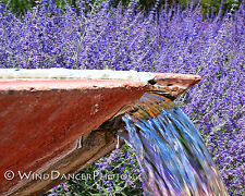 Summer, Lavender, Water, Fountain, Rustic, Fine Art Photo, 11 x 14 Matted Photo