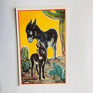 Donkeys Jenney And Little Jack Lon Megargee Painting Linen Postcard
