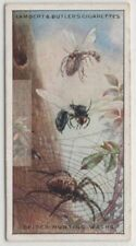 Spider Hunting Wasps 85+ Y/O Trade Ad Card