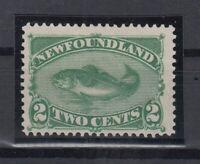 I3593/ CANADA – NEWFOUNDLAND – SG # 64 MINT NO GUM – CV 150 $