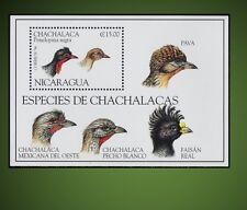 1994 SPECIES OF GROUSE - CHACHALACAS BIRDS ORTALIS  PENELOPINA NIGRA SCT 2068