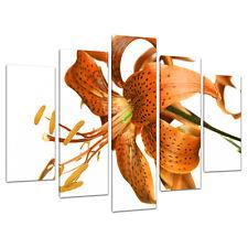 Set di 5 ARANCIONE immagini Canvas Wall Art CAMERA DA LETTO SALOTTO STAMPA 5142