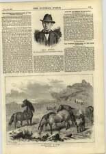1878 Emile hodel tentato ASSASSIN Dartmoor Pony