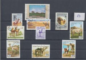 Kamele Lama Dromedar Alpaka (83)