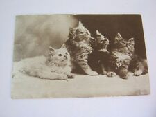 4 Kittens Antique 1910 Postcard   T*