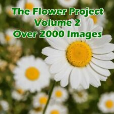2000 + Flower Images - Volume 2 - For Card Making - Crafting - Digital Download