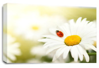"""Floral Daisy Wall Art Grey White Yellow Flower Love Home Canvas Picture 30 x 20"""""""