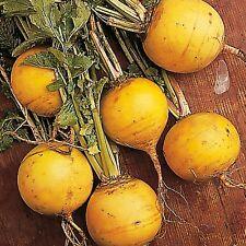 500 Turnip Seeds Golden Ball Turnip Seeds