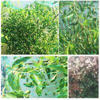 Anti Bird Pond Netting Net Plants Veg Fruit Protection Garden Fine Mesh Nylon