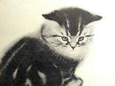 Newberry 1956 SWEET STRIPED KITTEN PETER w WHITE FACE Maybe Persian Print Matted