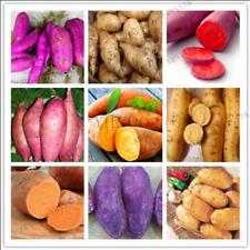 200 Pcs Seeds Sweet Potato Flores Vegetables Fruit Garden Supplies Plants Bonsai