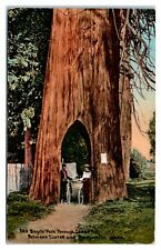 Bicycle Path through Cedar Tree between Everett and Snohomish, WA Postcard *295