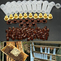 Complete Queen Rearing Cupkit System Bee Beekeeping Catcher Box +100 Cell Cups