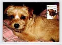 AUSTRALIA MK HUNDE HUND DOG DOGS MAXIMUMKARTE CARTE MAXIMUM CARD MC CM d9995