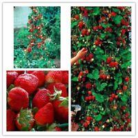 Red Climbing Strawberry 1000 Seeds,Garden Non-GMO Berry Fruit Juicy Plant Bonsai