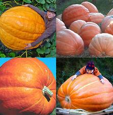 10Pcs New Giant Nutritious Pumpkin Vegetables Seeds Dills Atlantic Home New BT92