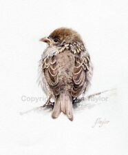 Paper Small (up to 12in.) Birds Art Prints