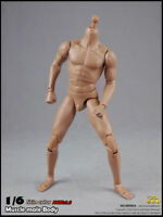 "1/6 25CM  Male Muscle Narrow Shoulders Figure Body F 12"" Figure Model Toy Gifts"