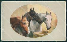 Horses Reichert postcard cartolina QT5988