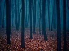 NATURE PHOTO FOREST TREES AUTUMN FLOOR LARGE WALL ART PRINT POSTER LF2051